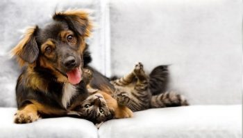 Pet Stain & Odor Removal